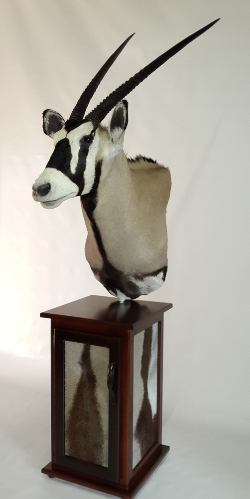 Pedestal Mounts Nylstroom Taxidermy